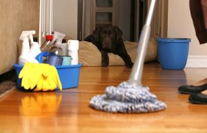 Tenants should maintain the home in a reasonably clean and habitable state.